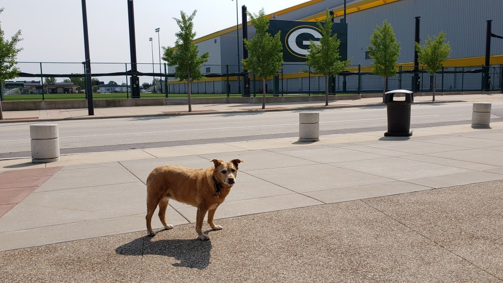Christina Irene's dog, Amica standing by the Green Bay Packers' practice field that is beside Lambeau Field.