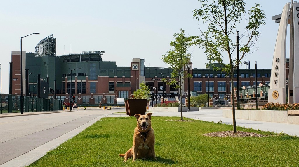 Christina Irene's dog, Amica, sitting in Green Bay Wisconsin with Lambeau Field in the background.
